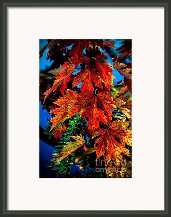 Fall Reds Framed Print By Robert Bales