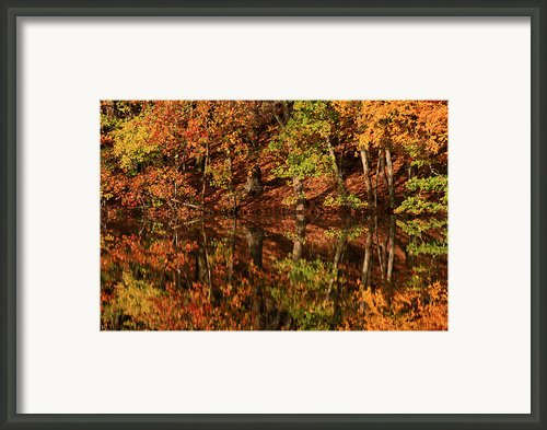 Fall Reflections Framed Print By Karol  Livote