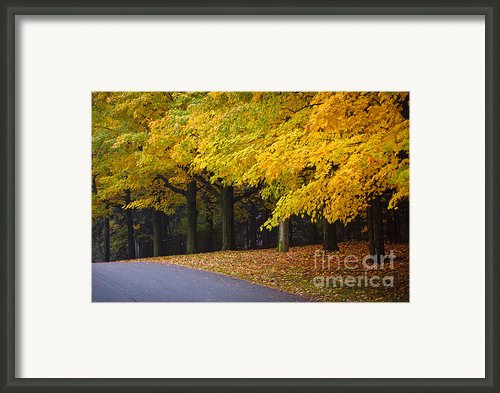 Fall Road And Trees Framed Print By Elena Elisseeva
