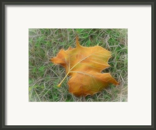 Fallen Framed Print By Wendy J St Christopher