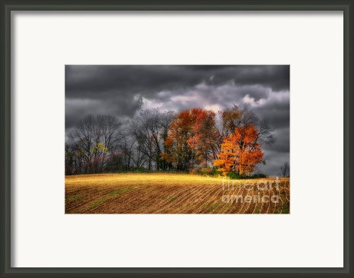 Falling Into Winter Framed Print By Lois Bryan
