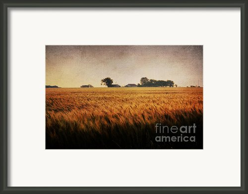 Family Farm Framed Print By Lisa Holmgreen
