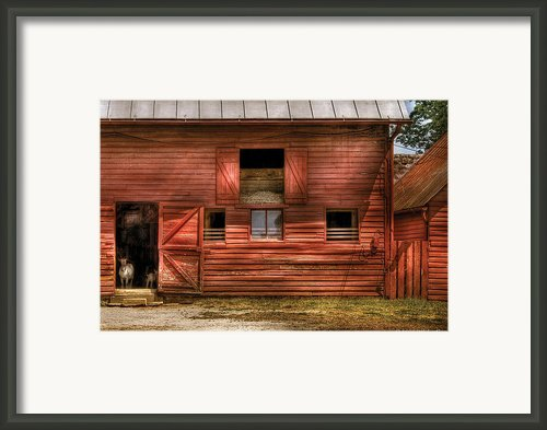 Farm - Barn - Visiting The Farm Framed Print By Mike Savad
