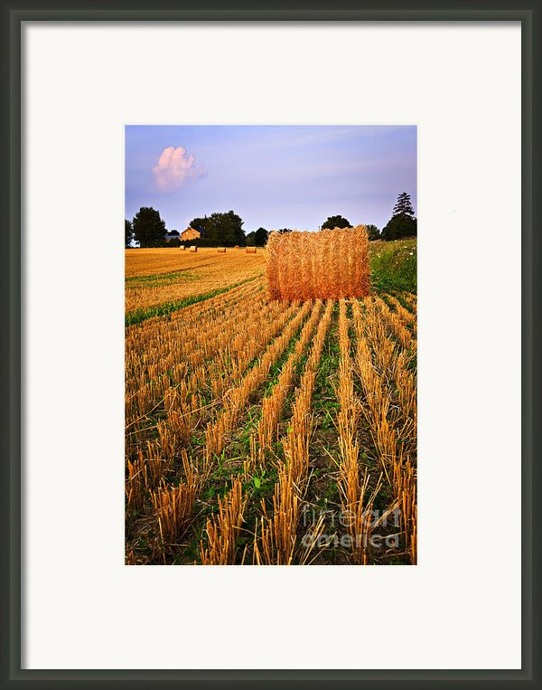Farm Field With Hay Bales At Sunset In Ontario Framed Print By Elena Elisseeva