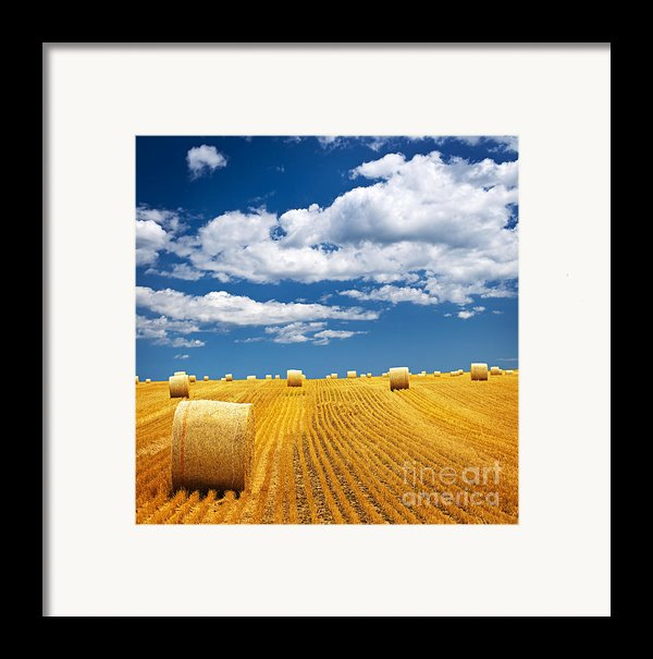 Farm Field With Hay Bales Framed Print By Elena Elisseeva