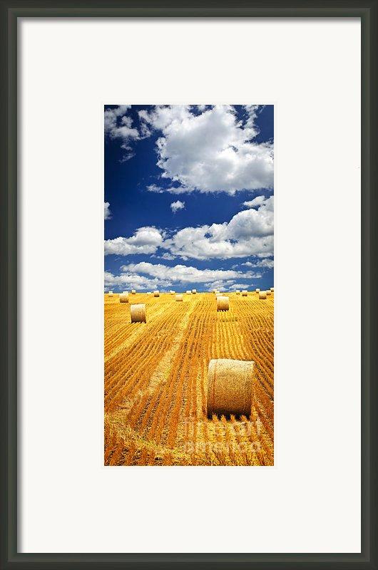 Farm Field With Hay Bales In Saskatchewan Framed Print By Elena Elisseeva