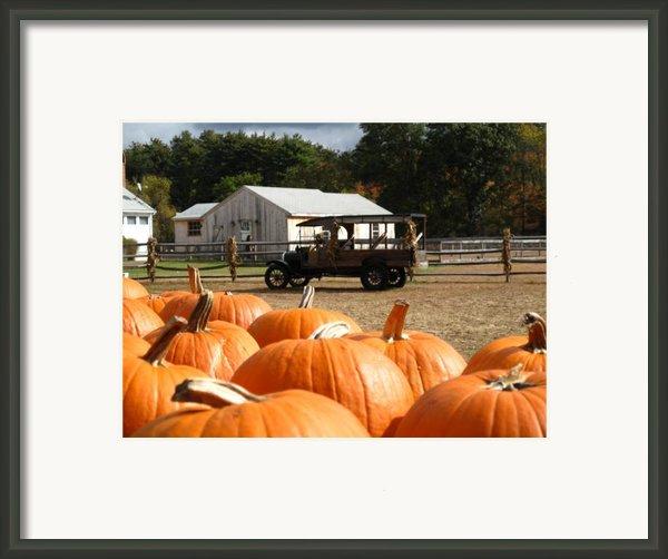 Farm Stand Pumpkins Framed Print By Barbara Mcdevitt