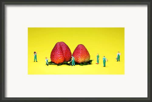 Farmers Working Around Strawberries Framed Print By Paul Ge