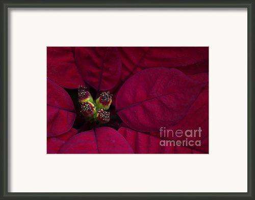 Festive Red Framed Print By Jacky Parker
