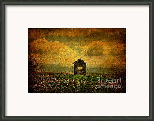 Field Of Dandelions Framed Print By Lois Bryan