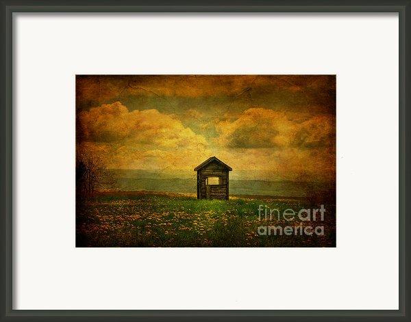 Field Of Dandelions Framed Print By Lois Bryan