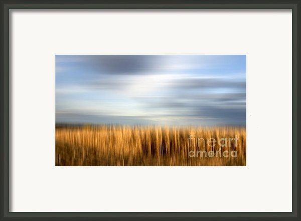 Field Of Maize Framed Print By Bernard Jaubert