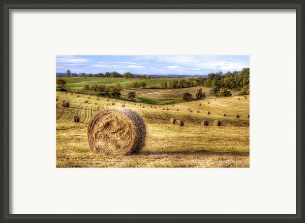 Fields Of Gold Framed Print By Scott Norris