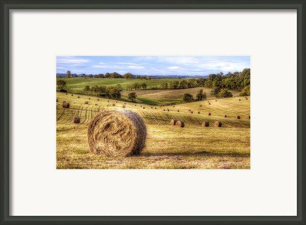 Fields Of Gold Framed Print By Scott Norris