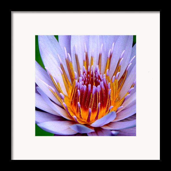 Fiery Eloquence Framed Print By Karon Melillo Devega