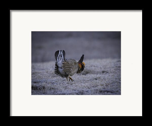 First Light 3 Framed Print By Thomas Young