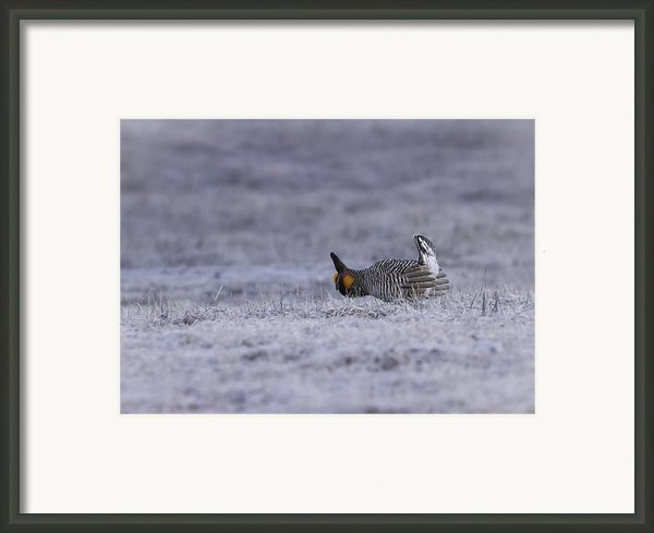 First Light Framed Print By Thomas Young