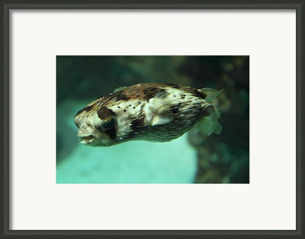 Fish - National Aquarium In Baltimore Md - 1212136 Framed Print By Dc Photographer