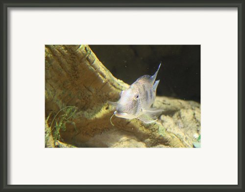 Fish - National Aquarium In Baltimore Md - 121248 Framed Print By Dc Photographer