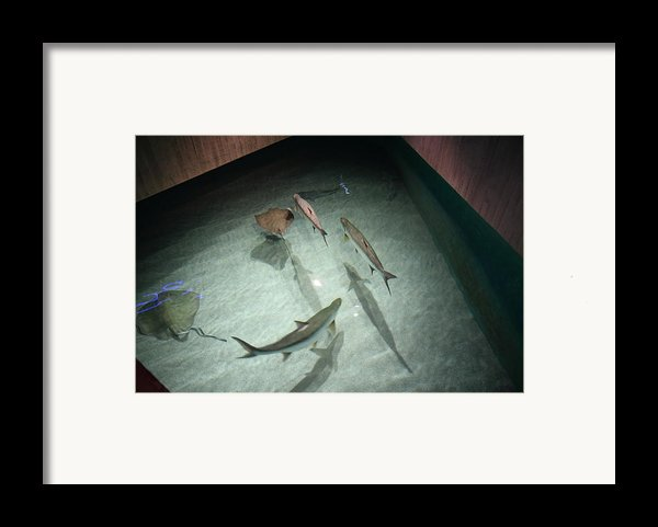 Fish - National Aquarium In Baltimore Md - 121283 Framed Print By Dc Photographer