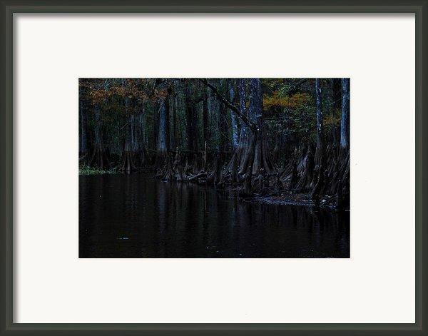 Fisheating Creek 28 Framed Print By Carol Kay