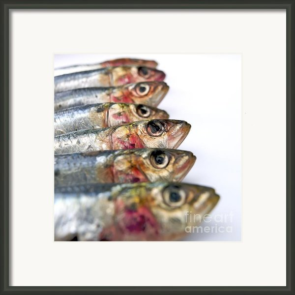 Fishes Framed Print By Bernard Jaubert