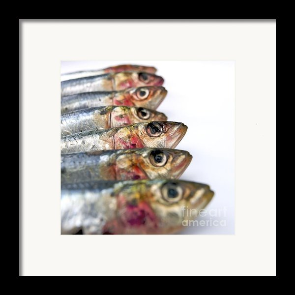 Fishes Framed Print By Bernard Jaubert