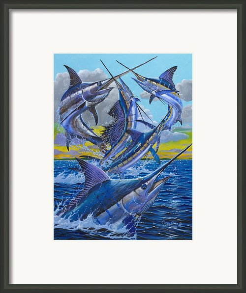 Five Billfish Off00136 Framed Print By Carey Chen