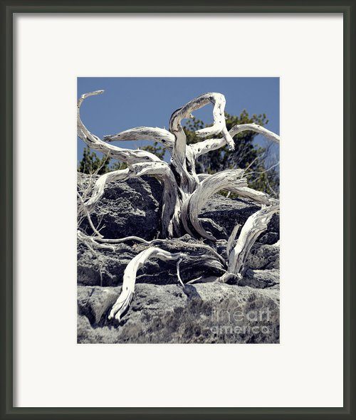 Flailing Octopus Tree Framed Print By Luke Moore