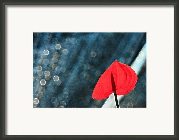 Flamingo In Love Framed Print By Suradej Chuephanich