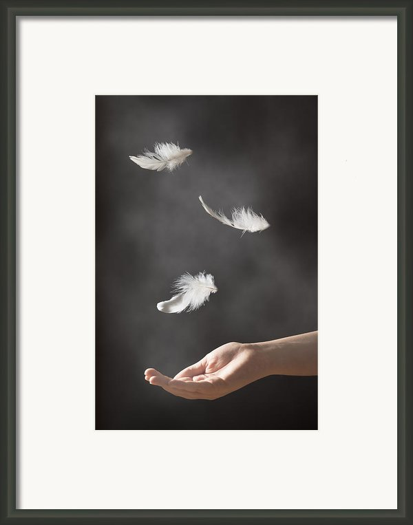 Floating Feathers Framed Print By Christopher And Amanda Elwell
