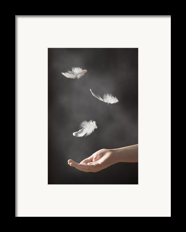 Floating Feathers Framed Print By Amanda And Christopher Elwell