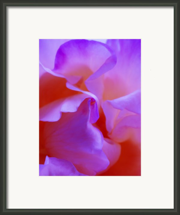 Floral Abstract Red Pink Purple - Flowers Close Up Fine Art Photograph Framed Print By Artecco Fine Art Photography - Photograph By Nadja Drieling