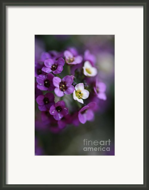 Flower Ball Framed Print By Joy Watson