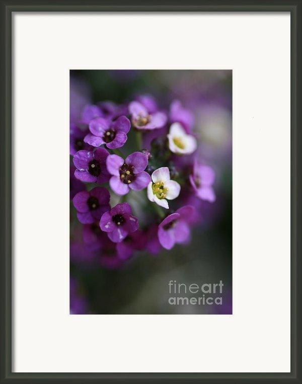 Flower Ball Framed Print By Joy Watson