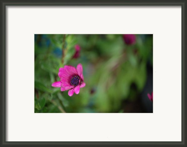 Flower Bokeh  Framed Print By Jordan Rusin