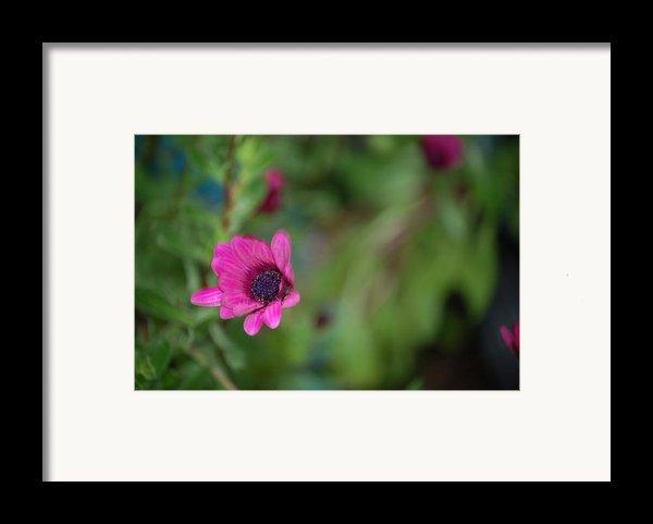 Flower Bokeh  Framed Print By Jordan Rusin