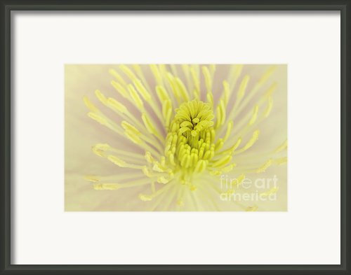 Flower Centre Framed Print By Svetlana Sewell