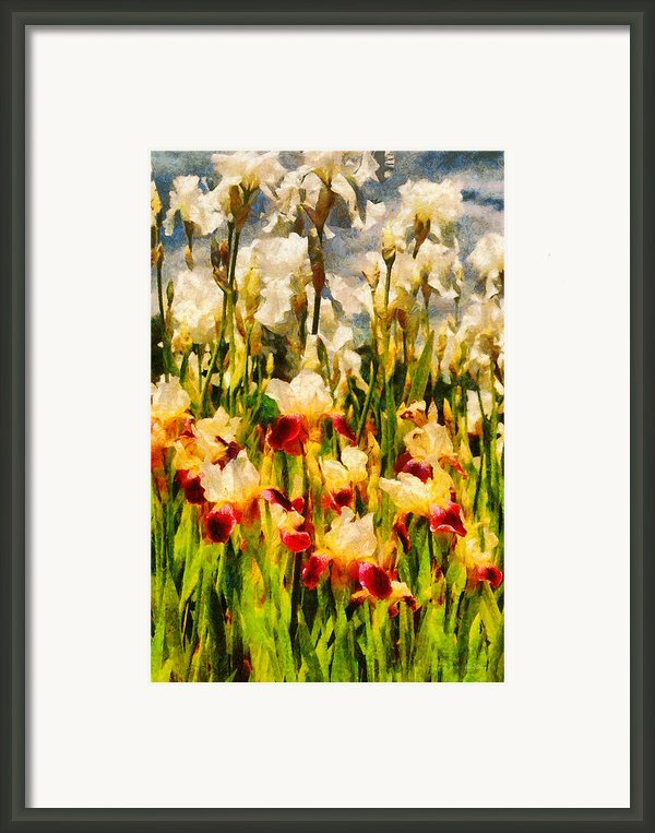 Flower - Iris - Mildred Presby 1923 Framed Print By Mike Savad