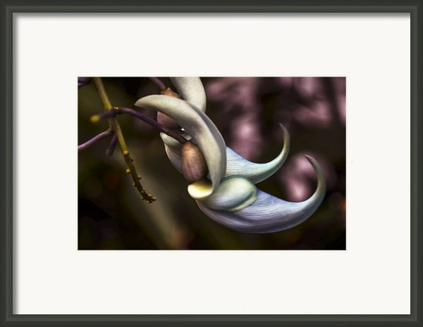 Flower Of A Jade Vine Framed Print By Julie Palencia