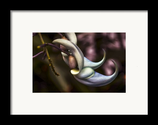 Flower Of A Jade Vine Framed Print By Julie Palencia