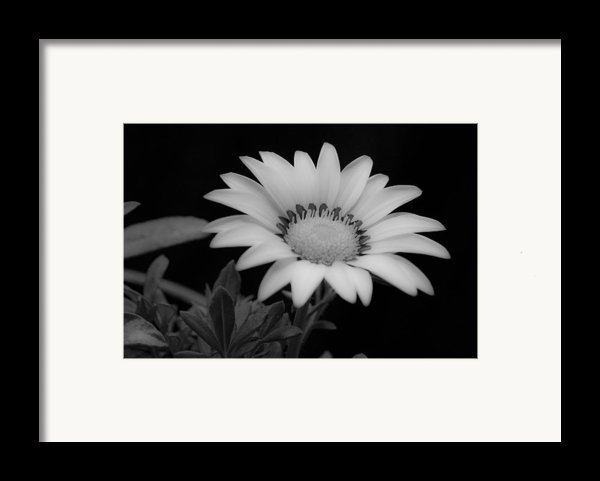 Flower  Framed Print By Ron White