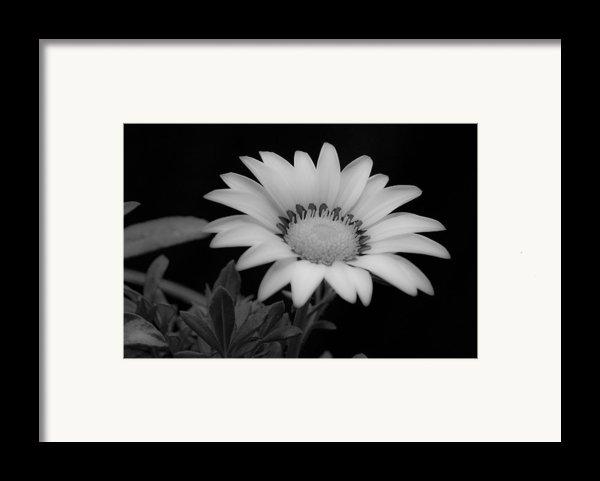 Flower  Framed Print By Ron White
