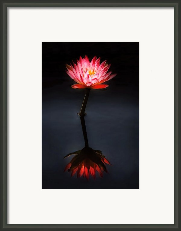 Flower - Water Lily - Nymphaea Jack Wood - Reflection Framed Print By Mike Savad