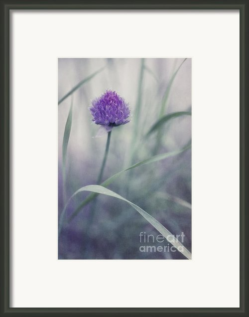 Flowering Chive Framed Print By Priska Wettstein