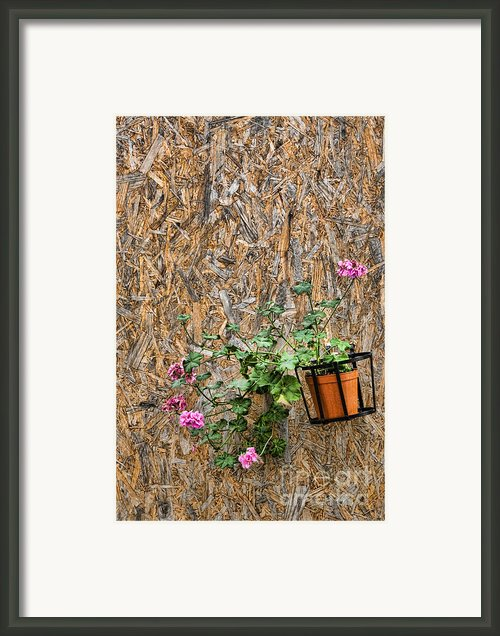 Flowers On Wall - Taromina Framed Print By David Smith