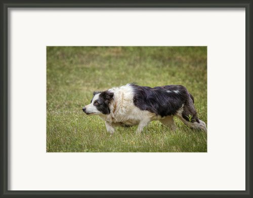 Focus Framed Print By Bill  Wakeley