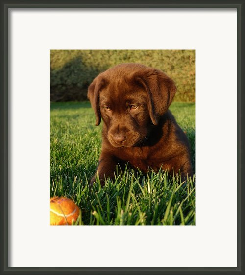 Focus Framed Print By Larry Marshall