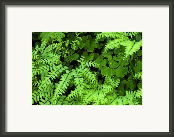 Foliage At Springtime Framed Print By Andrew Soundarajan