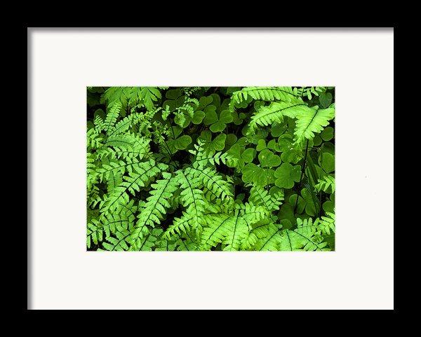 Foliage At Springtime Framed Print By Andrew Soundarajan